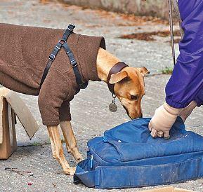 Scent work – Newest AKC Dog Sport