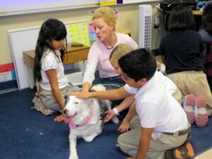 therapy dog, puppy socialization, az dog sports, julie brewer