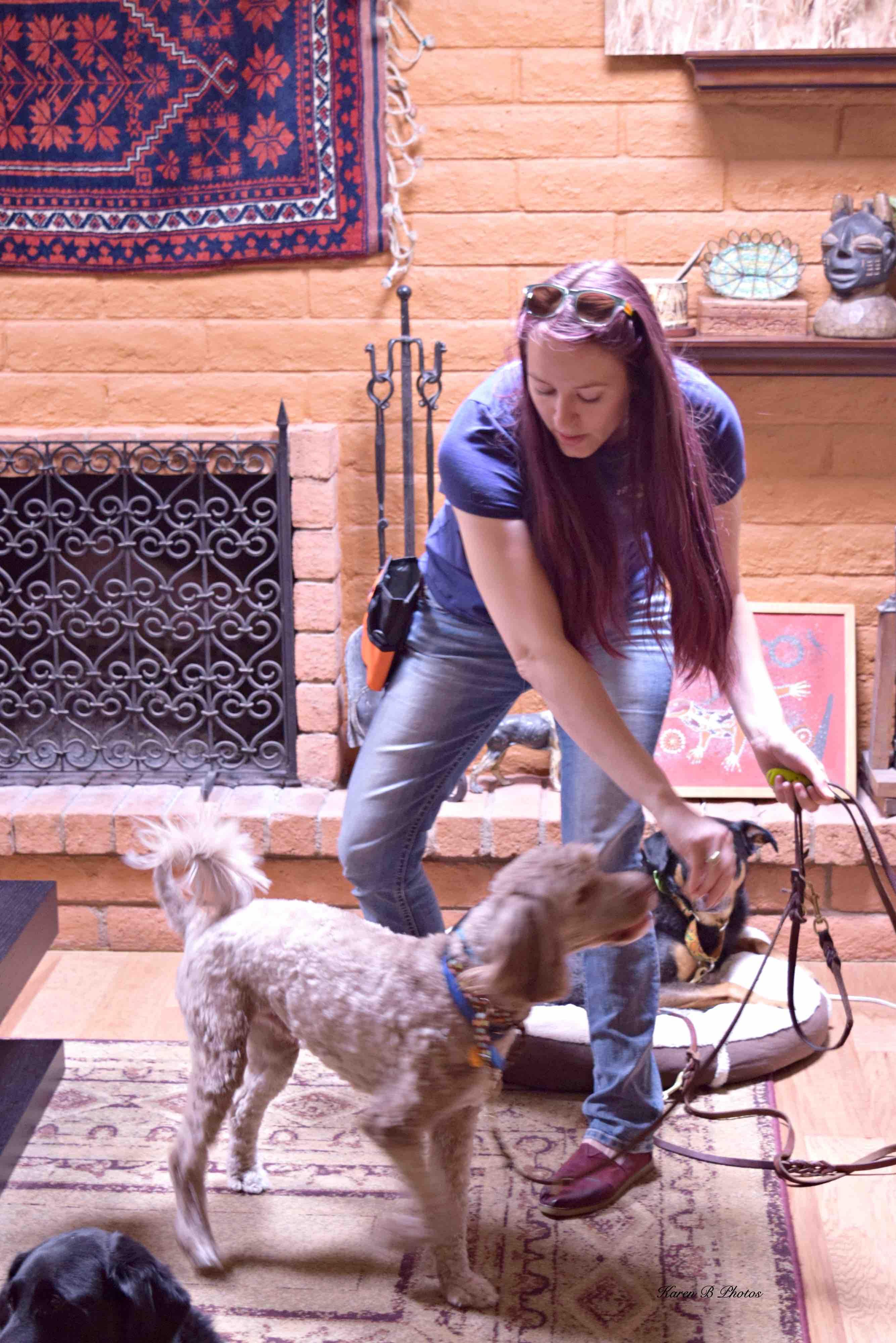 Service Dog Workshop Recap