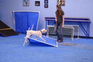 service dog workshop, jessa parker, az dog smart, dog trainer academy