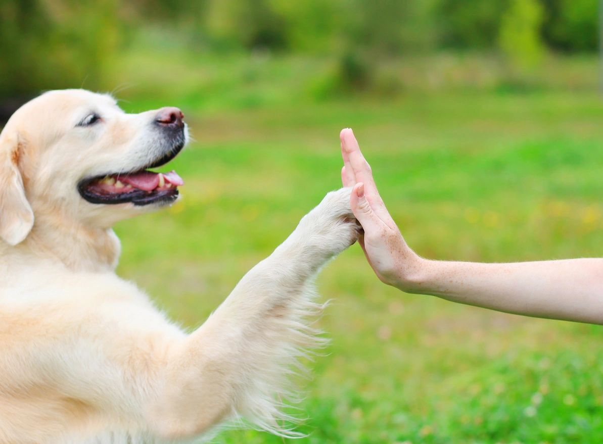 how do dogs learn, az dog sports, dog training phoenix