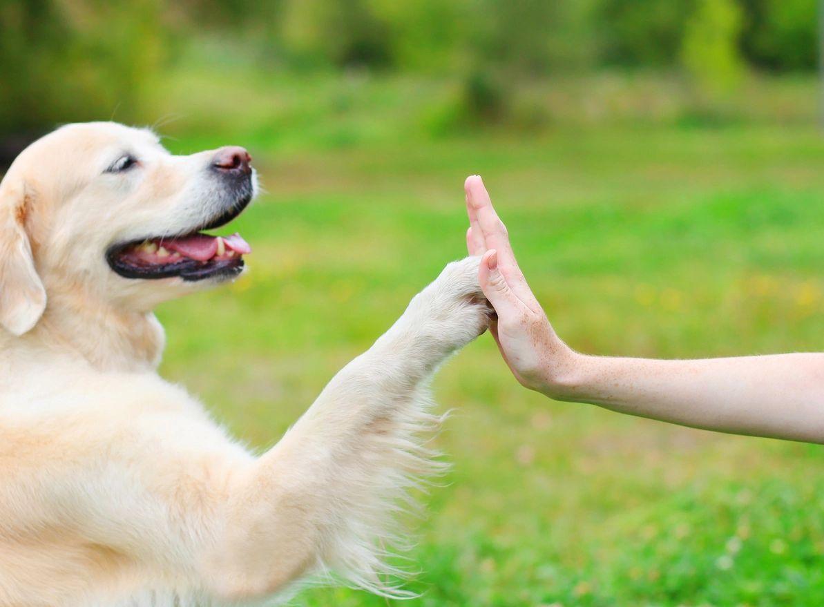 how do dogs learn, az dog sports, dog training phoenix