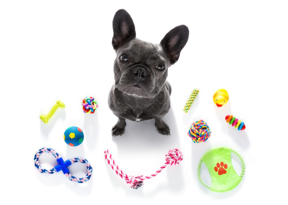 Understanding Dog Motivators