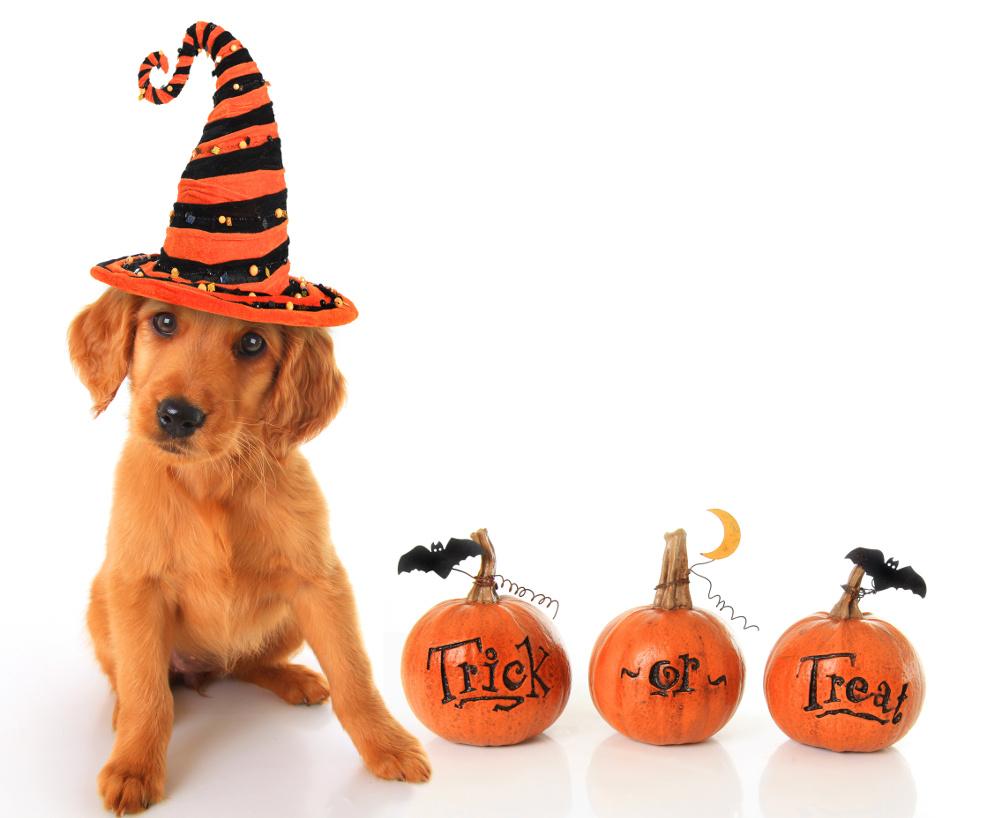 Dog Halloween Safety Tips