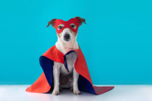 dog halloween, dog trainer academy, dog training, az dog smart, az dog sports