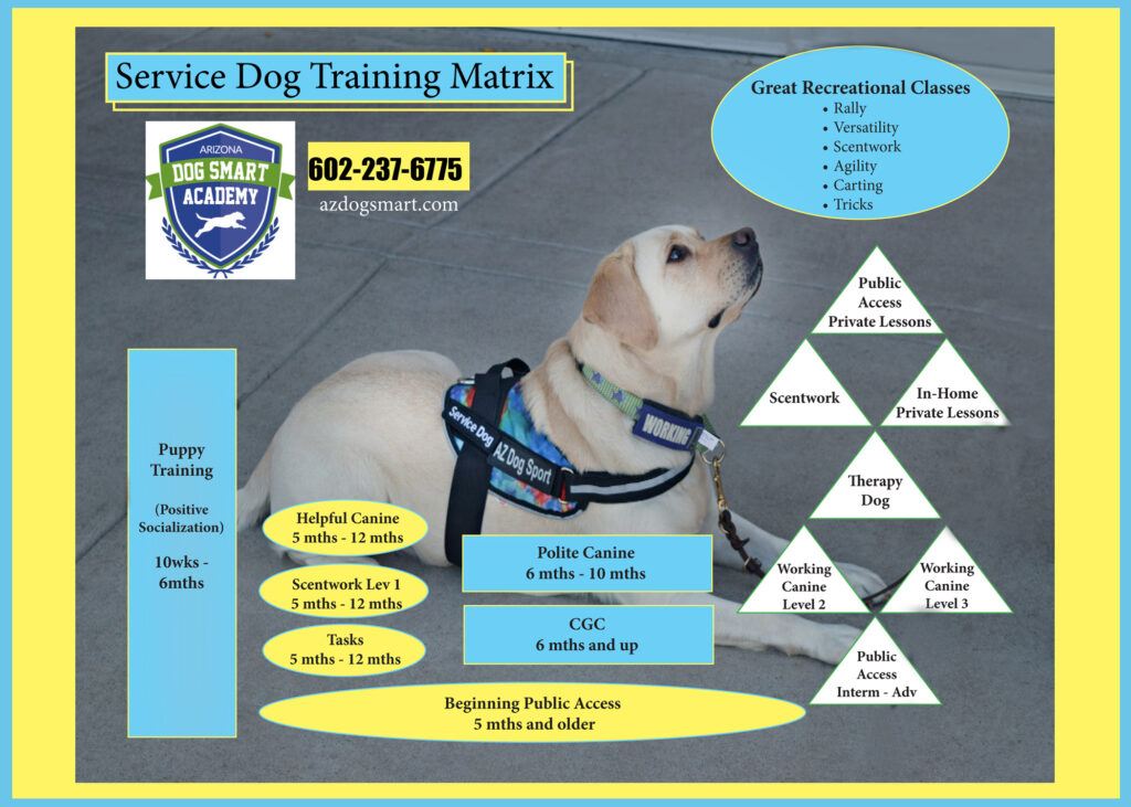 service dog, service dog training, service dog classes, az dog sports