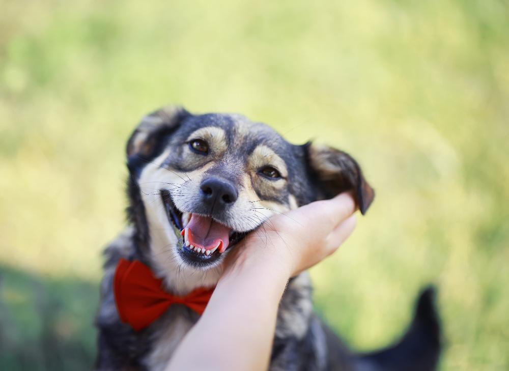dog domestication, dog training academy, az dog sports