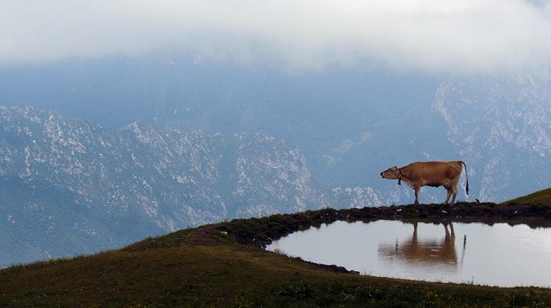 italiainpiega-pieghe-meravigliose-itinerari-moto-nord-italia-monte baldo e monte bondone-formaggio di malga