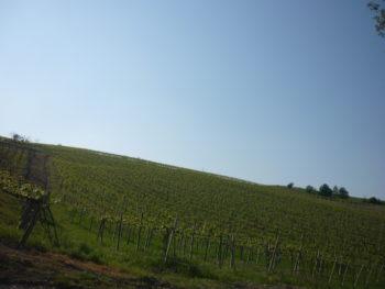 italiainpiega-pieghe-meravigliose-itinerari-moto-nord-italia-vinando-oltrepo' pavese-panorama 2