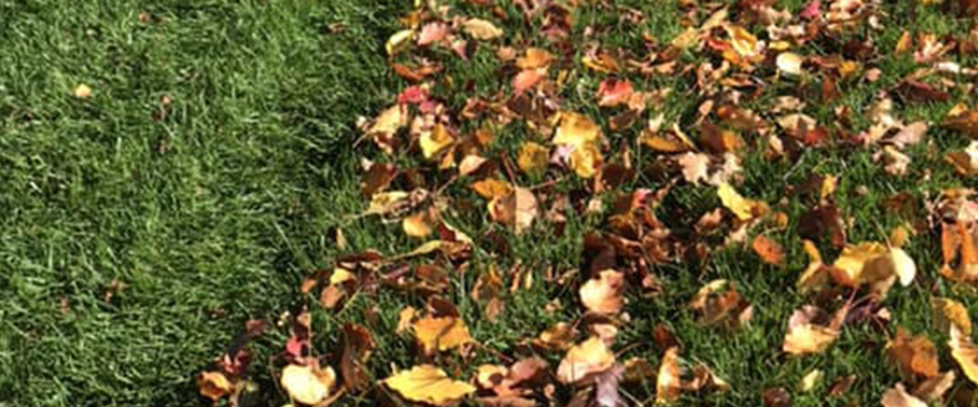 Leaf Removal and Edging