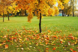 fall lawn with leaves