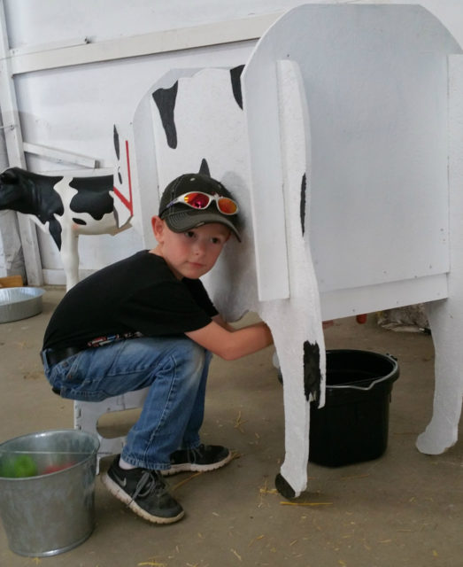Little Shavers Milking a Cow