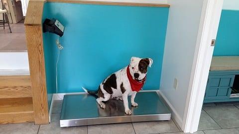All Animal Veterinary Center