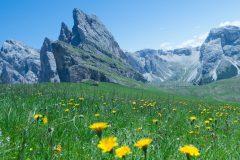 Flowers-Dolomites
