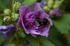 Flower-and-Bee