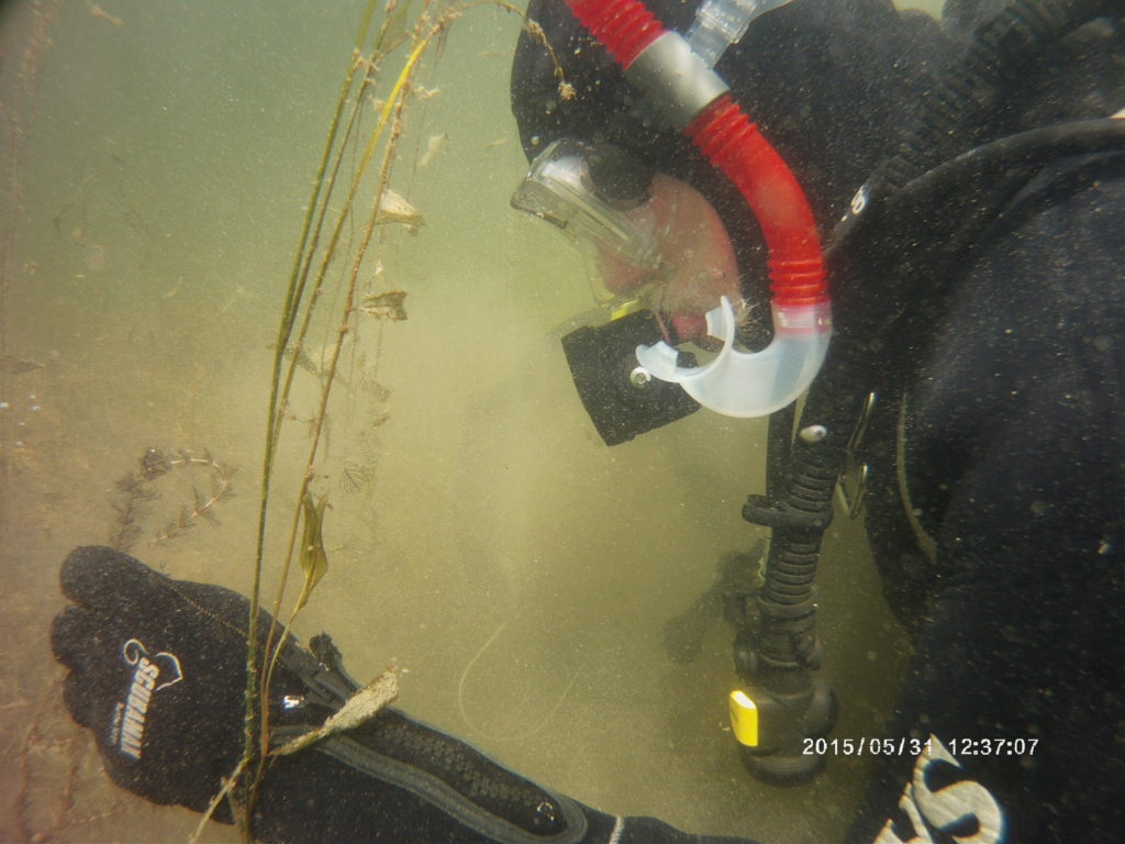 Hand Picking Invasive Aquatic Plants