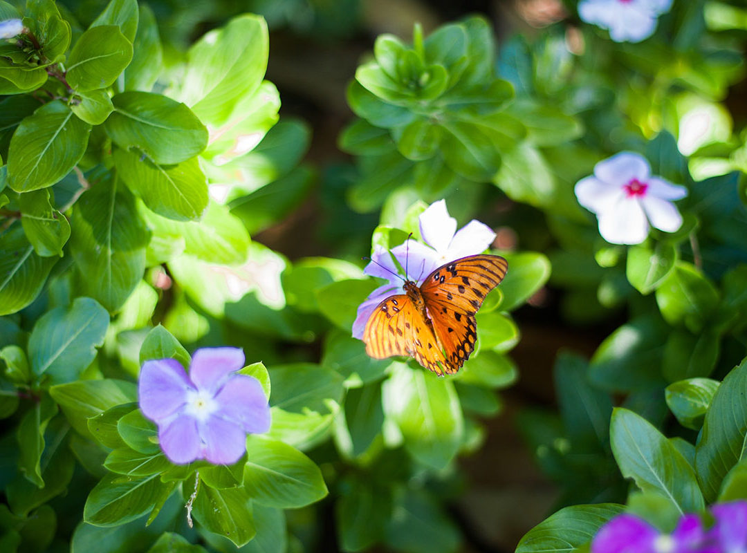 Transformation In the Divine Love