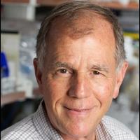 Dennis Carson PhD