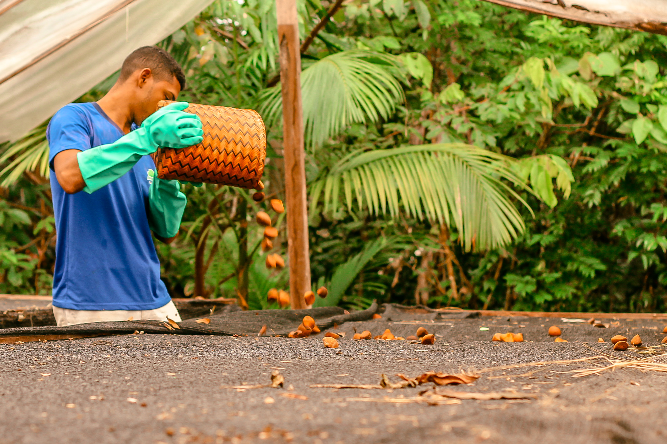 Prêmio reconhece iniciativas de bioeconomia na Amazônia com até R$30 mil