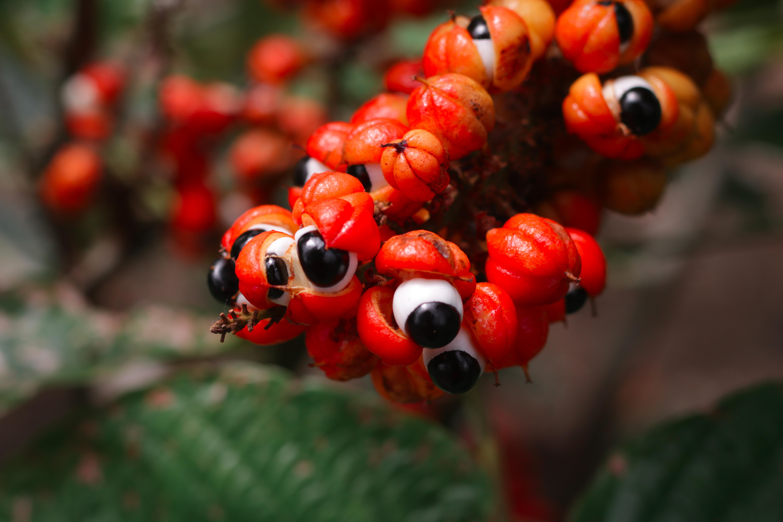 Projetos de bioeconomia amazônica podem concorrer a prêmio de até R$ 30 mil