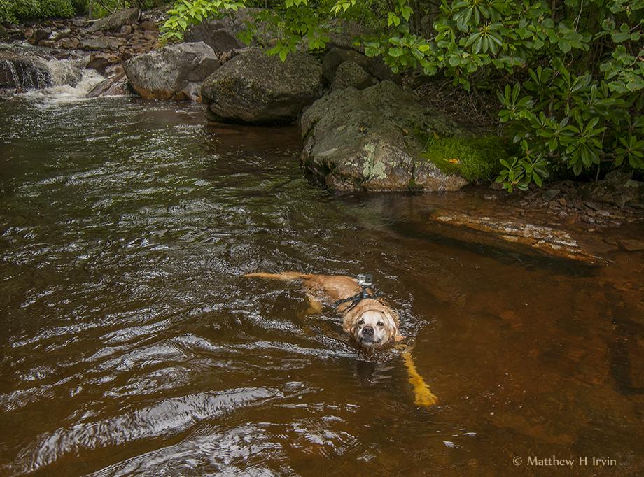 Woof, me swimming!