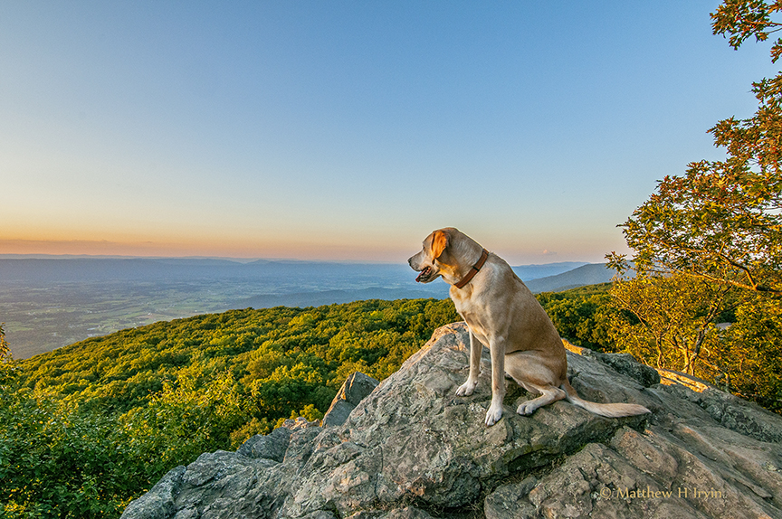 Woof, watching the sunset at Shiny Doe!