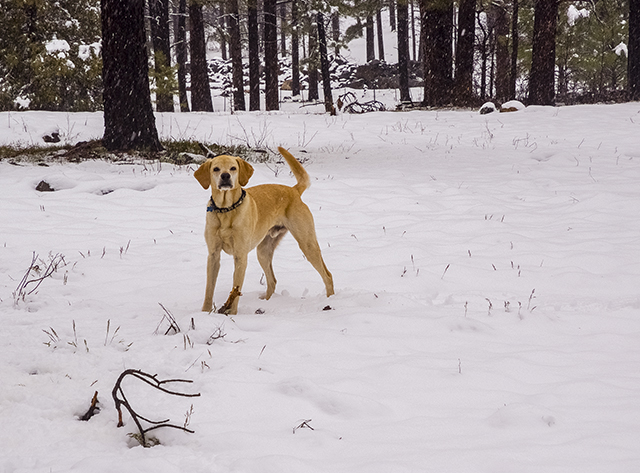 I love playing in the snow, double WOOF!