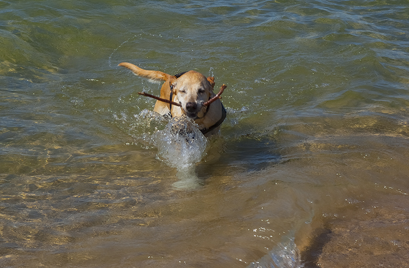 I am swimming in a Great Lake and woof, was it great!