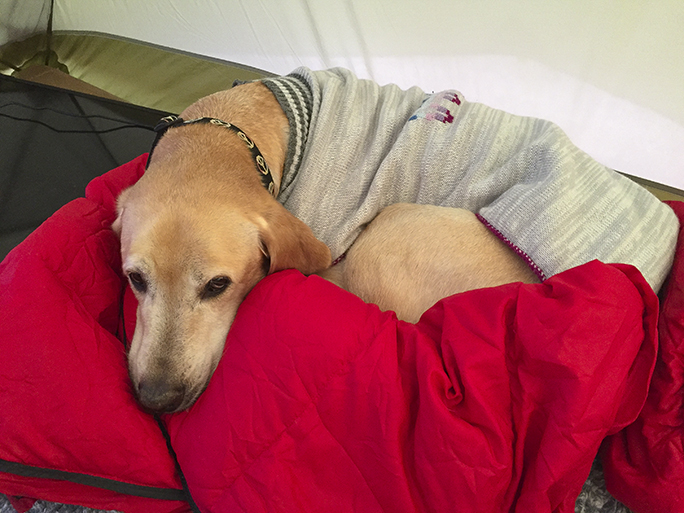 Woof, I like my sweater and I have my own down sleeping bag!