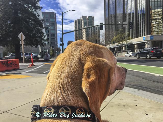 Crossing a busy street in Oakland.