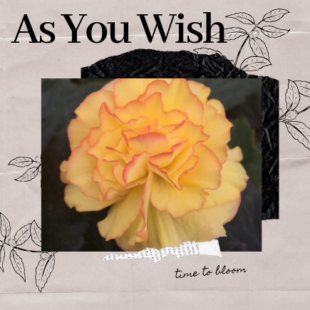 as you wish, wishes, dreams, no restrictions, writing exercise