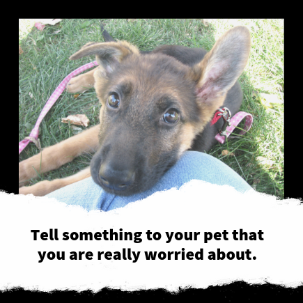 Tell Your Pet