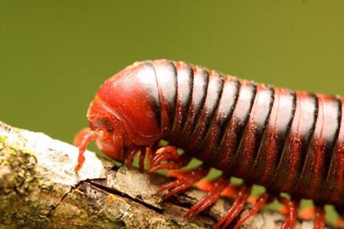 Centipedes & Millipedes