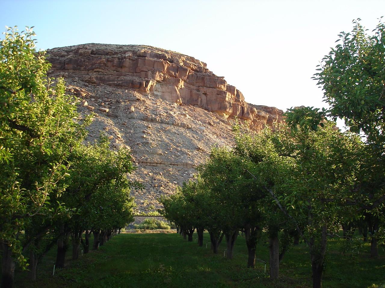 16.pears