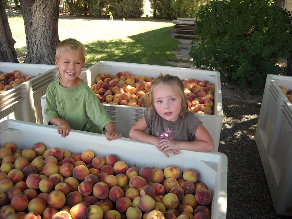 19.peaches small