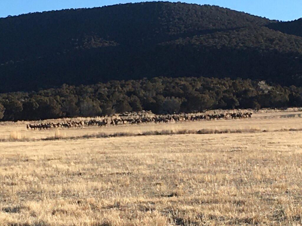 Alvey Elk 2