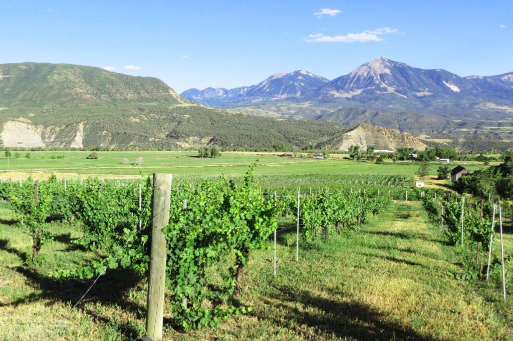 TC vineyard 2