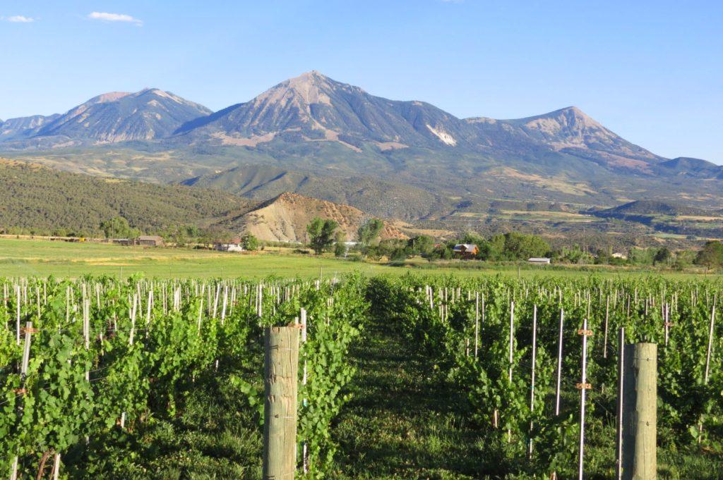 TC vineyard 3