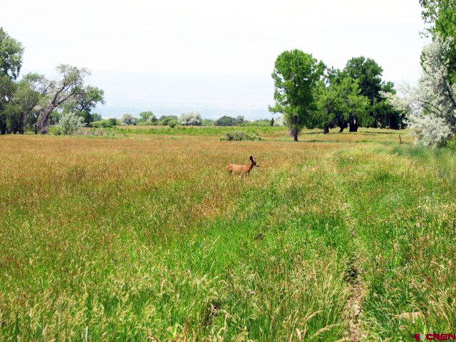 hay field 2