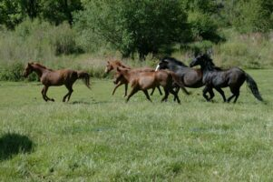 action at the ranch & Pate
