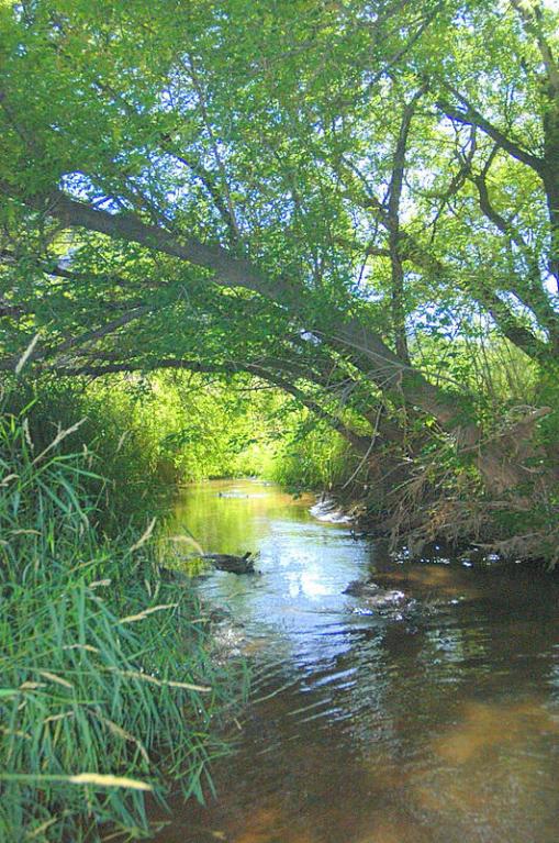 creek&trees (2)