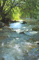 rushing water of the creek