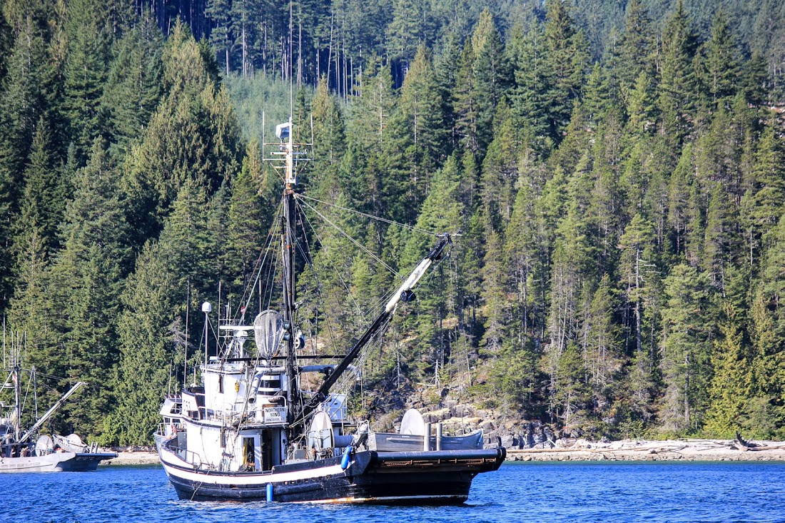 The Future Of B.C. Commercial Fishing Report