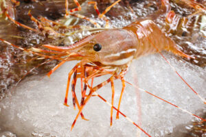 New Petition Supporting Prawn Harvesters — Please Sign!