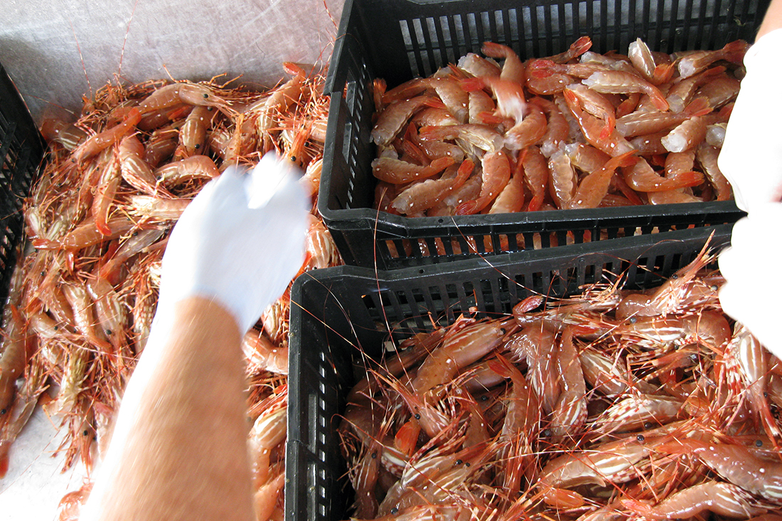 FOPO Submits DFO Letter on Prawns