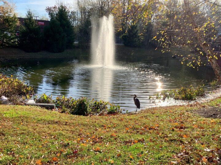 Exchange at Van Dorn Condos pond