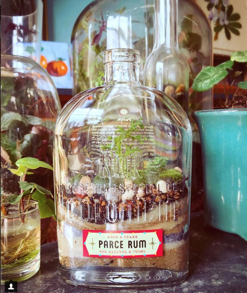 NT Parce Rum Bottle Terrarium