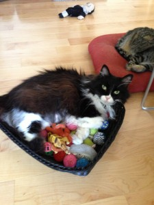 Jane in toy basket