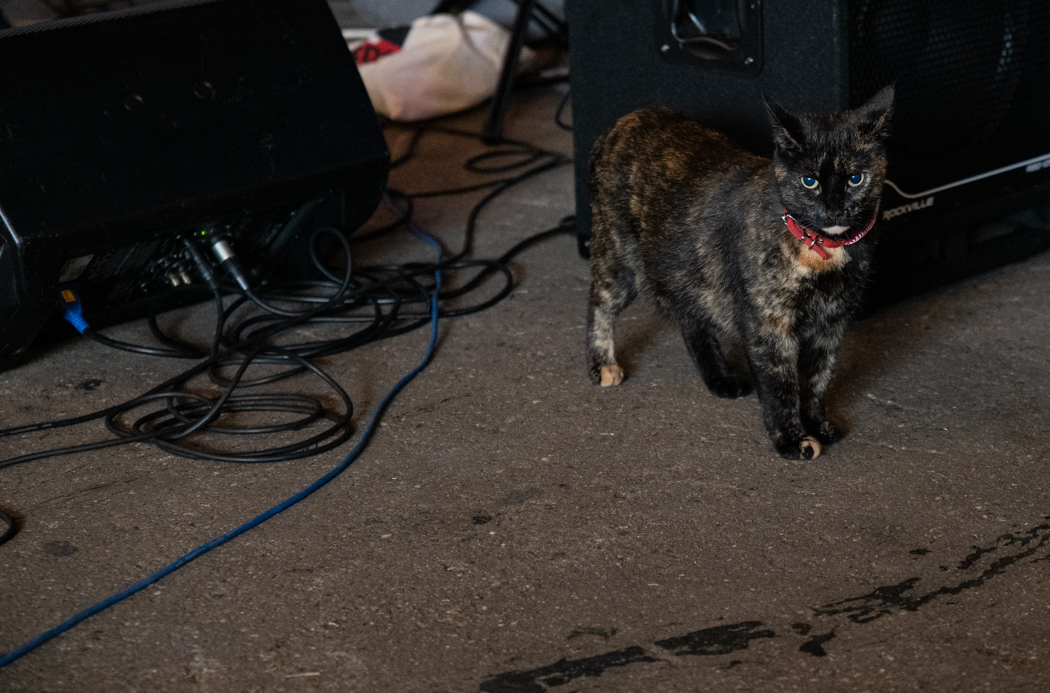 a cat at the show