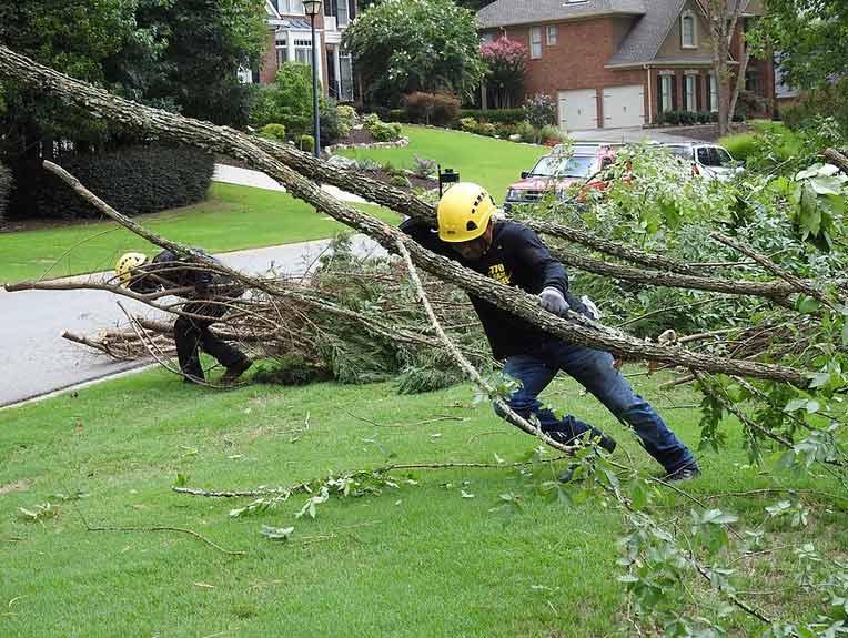 North Georgia Tree Removal Services